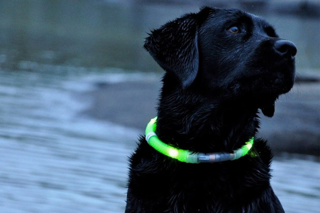 Glowdoggie Illuminated LED Dog Collar