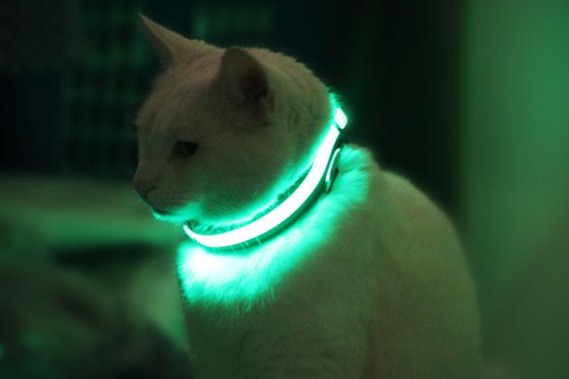 Halo Mini Illuminated Pet Collar 2
