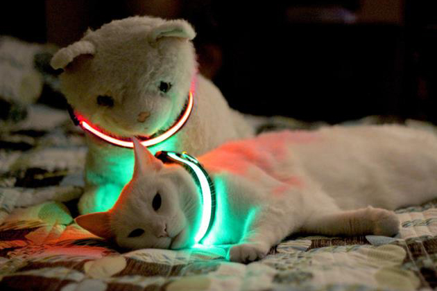 Halo Mini Illuminated Pet Collar 3
