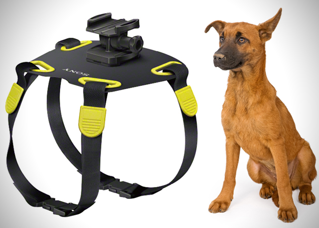 Sony Action Camera Dog Mount