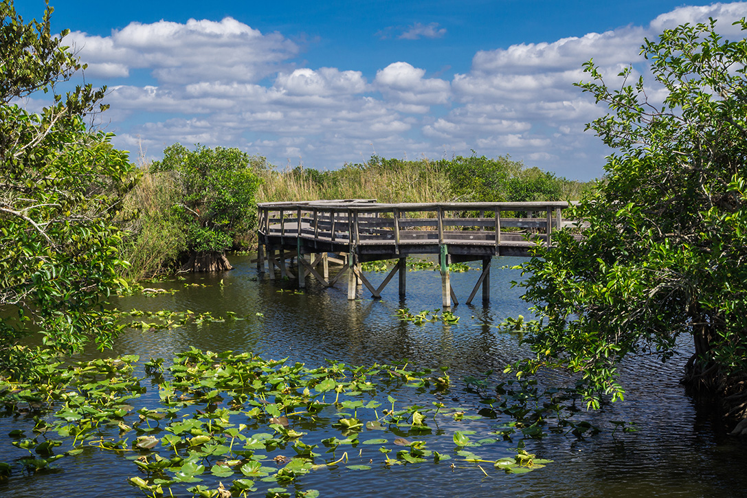 Everglades National Park Florida 0