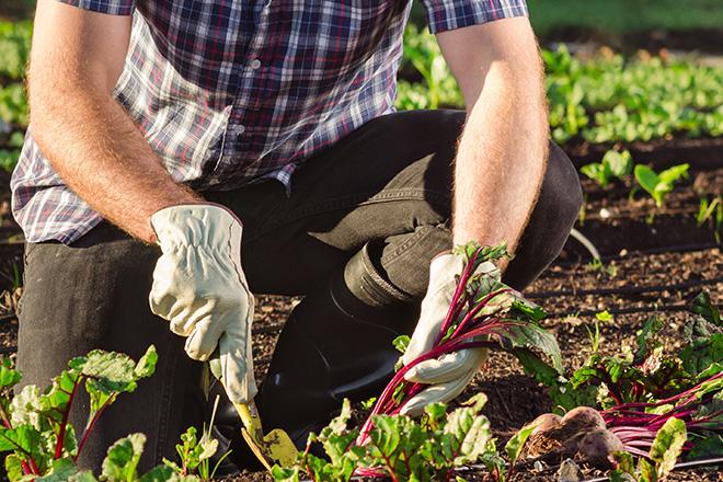 Gardening 0