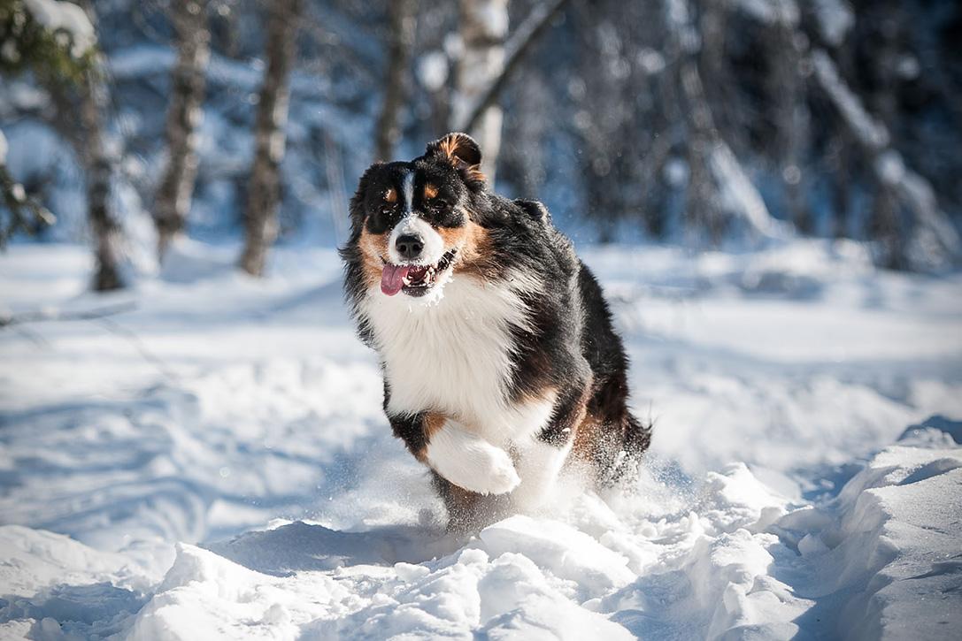 10 Best Hiking Dog Breeds
