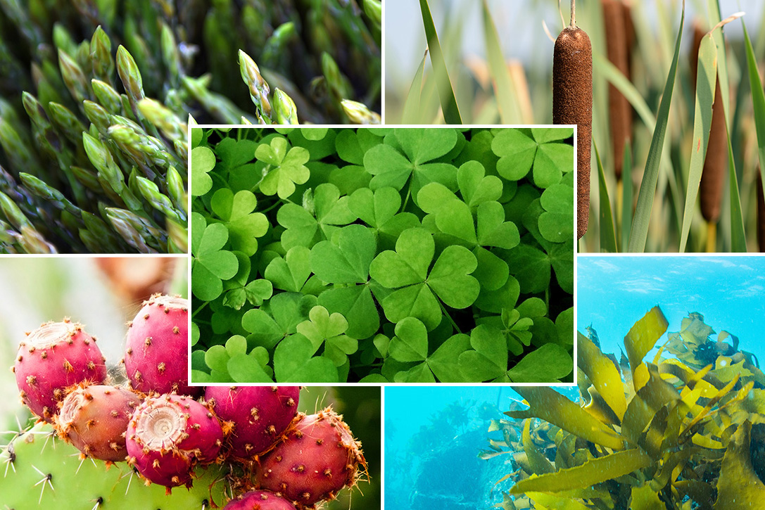 Eat Your Greens 15 Best Edible Wild Plants Hiconsumption