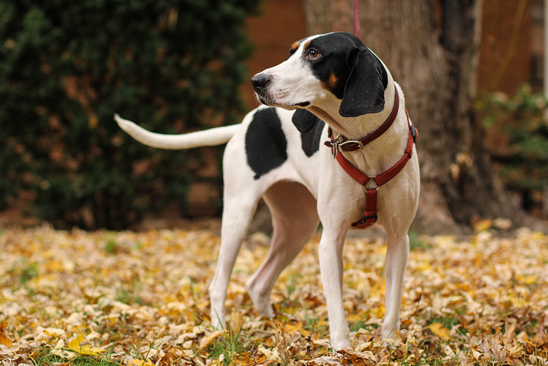 15 Best Hunting Dog Breeds | HiConsumption