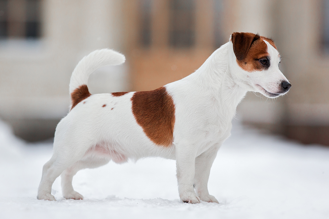 15 Best Hunting Dog Breeds Hiconsumption